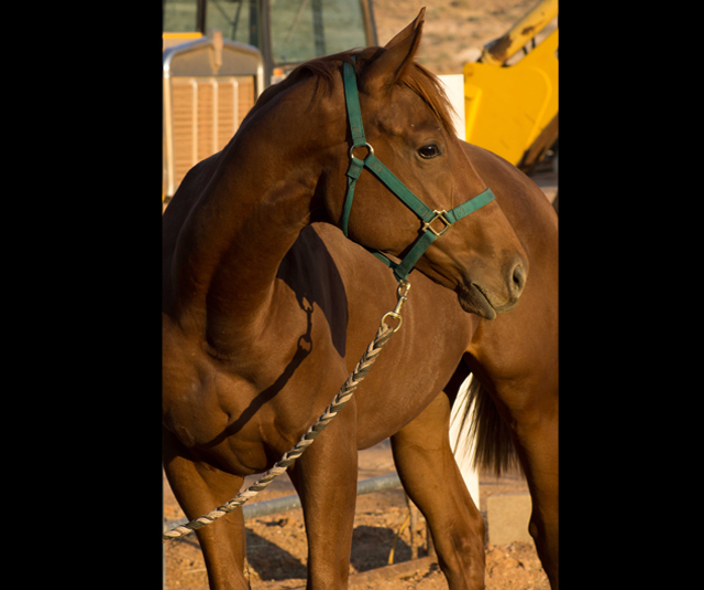 Z Thoroughbred Racing Llc Thoroughbred Horse Racing